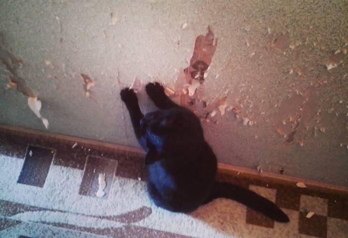 Кот явно не оценил прелесть новых обоев