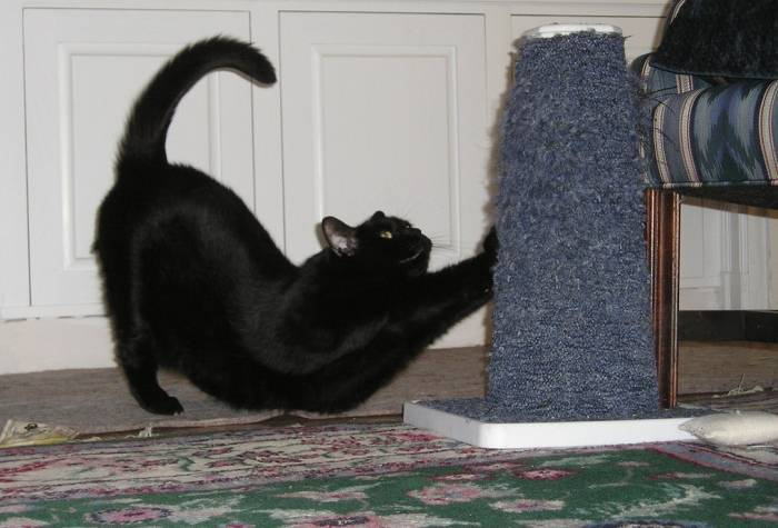 Коту явно понравилась новая когтеточка
