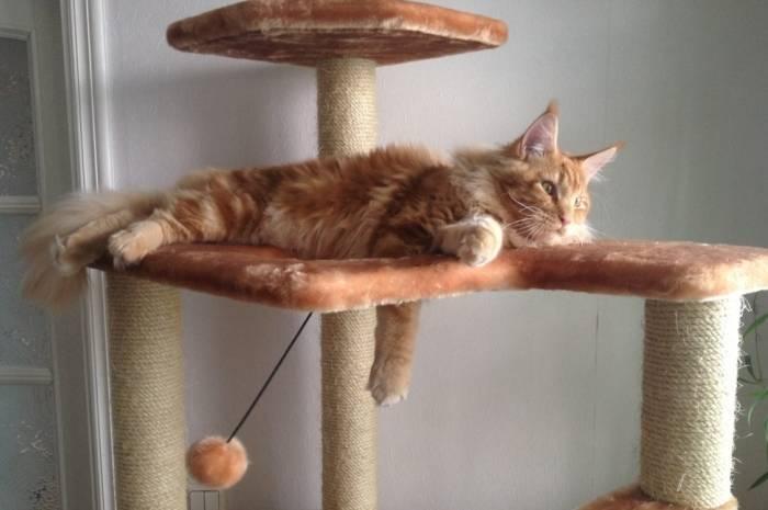 Многоэтажная когтеточка для большого рыжего кота