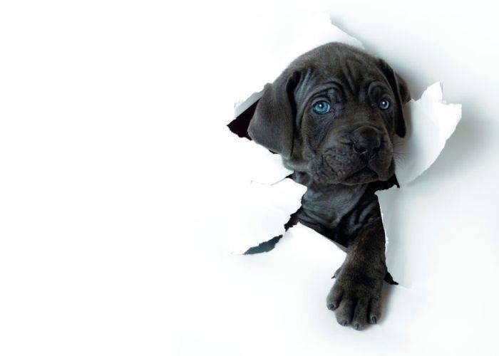 Как отучить собаку грызть обои