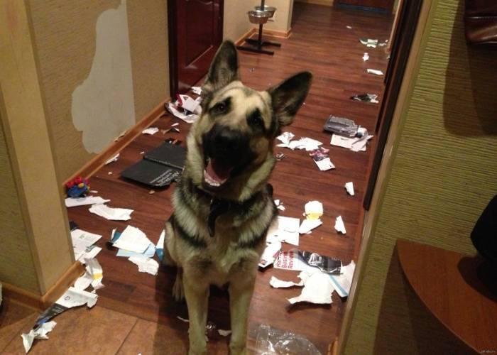 Собака дома определенно заскучала