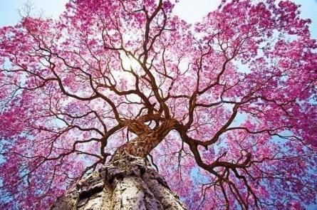 Фото дерева снизу