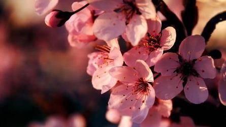 Красивые цветки